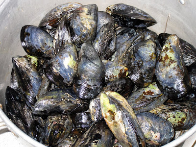 Wild Coleman Cove mussels
