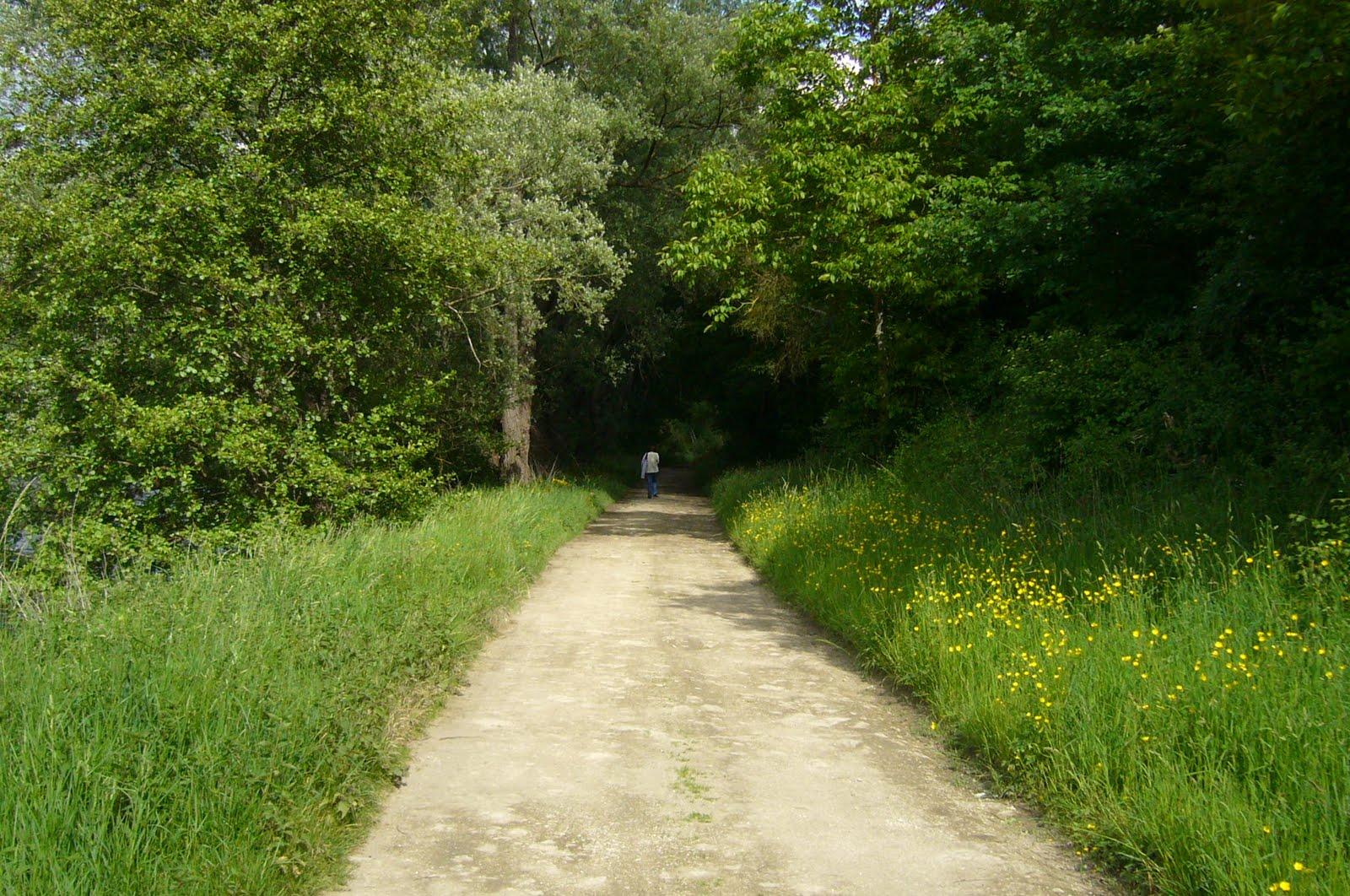 Ave Maria Les Chemins De Lumi 200 Re Le Rosaire Et Le Chapelet