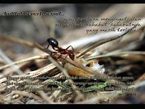 Jadilah seperti semut yang sentiasa mengingatkan sahabatnya...