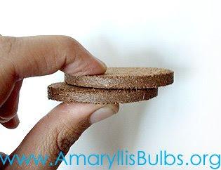 Amaryllis soil disk