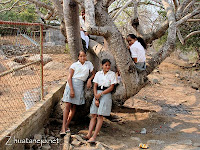 schoolgirls hanging out in their favorite tree