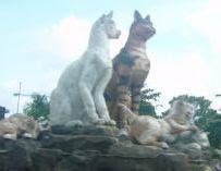 More cats in town, Kuching, Sarawak, Borneo Island