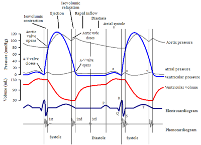 cardiac cycle diagram from Wikipedia