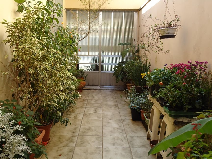 plantas de jardim lista:Lar do Verde: As Plantas do Corredor