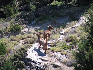 Zwierzęta górskie/Mountain animals:)