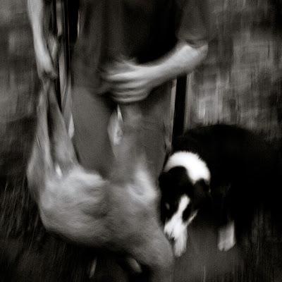 tableau de chasse, l'homme, le chien et le chevreuil, hunting scene, photo © dominique houcmant
