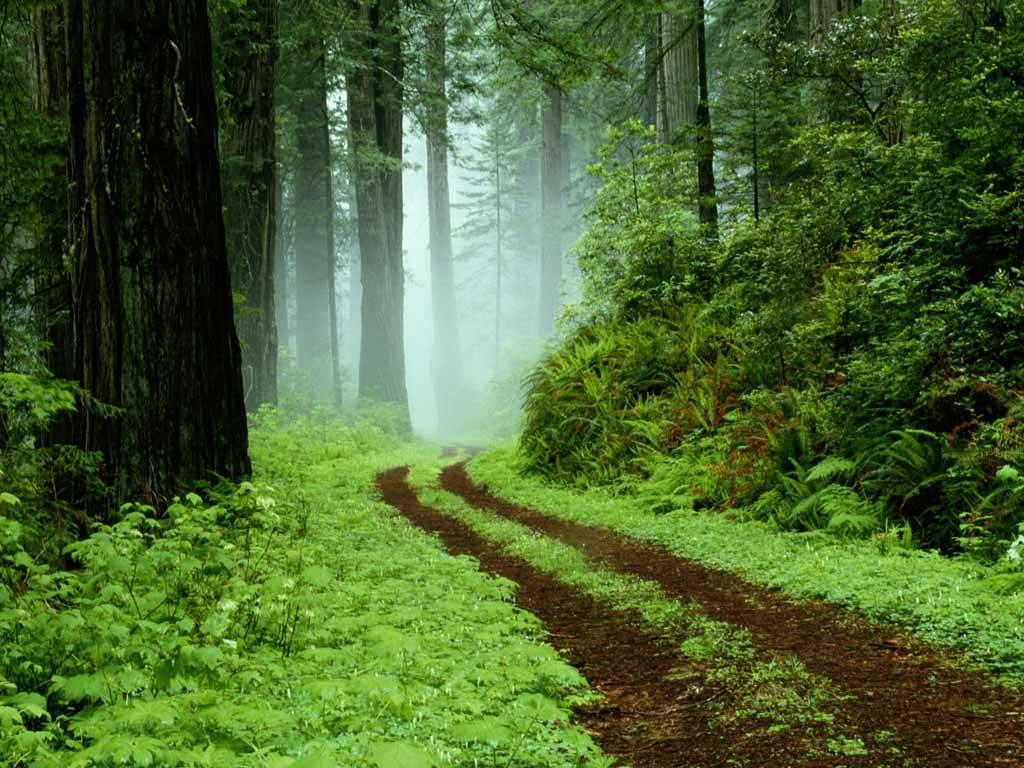 La vida es un largo camino con más senderos que la mano de un viejo.