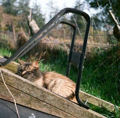 feral cat photo on a wheelbarrow