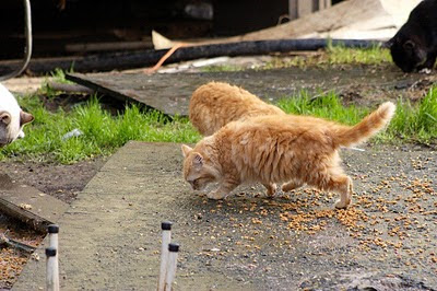 feral cats feeding time photo