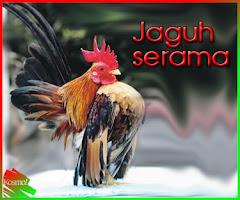 jaguh ayam cantik