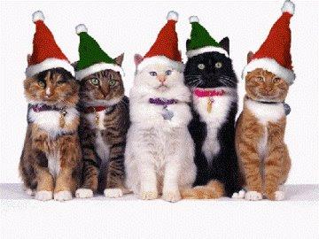 Fotos e Imagens de Gatos - Wallpapers de Gatos