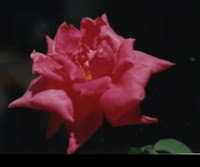 Cuando la belleza alimenta el Alma publicado en Horoscopia por susana colucci.  Mas que Astrologia