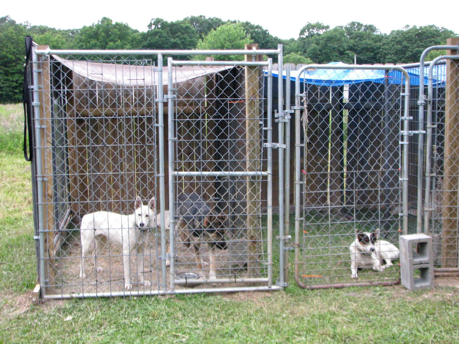 Are Kennels Good For Dogs