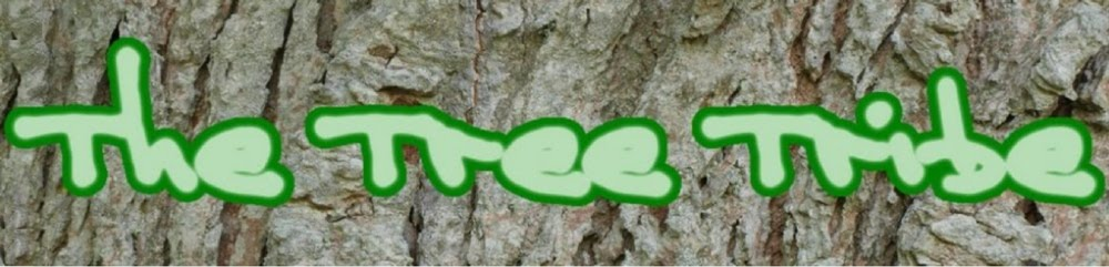 Free Chainsaw Training, tree surgery, tree care, tree advice, tree climbing equipment, ireland