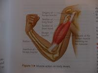 efek pengguna steroid
