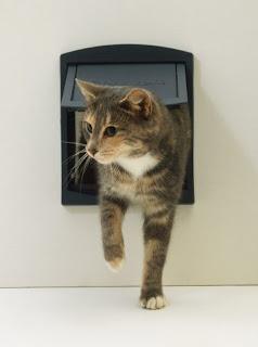 cat bladder infection vomiting