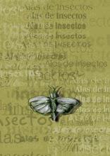 Alas de Insecto (Alea Blanca, 2006)