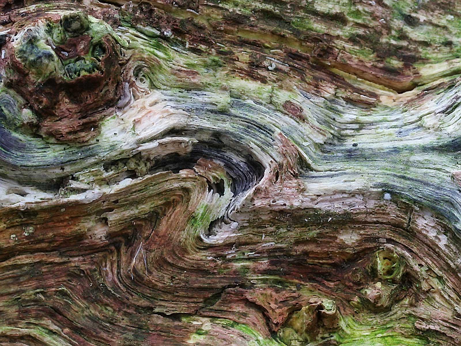 -Alice Walker- (Wood Texture