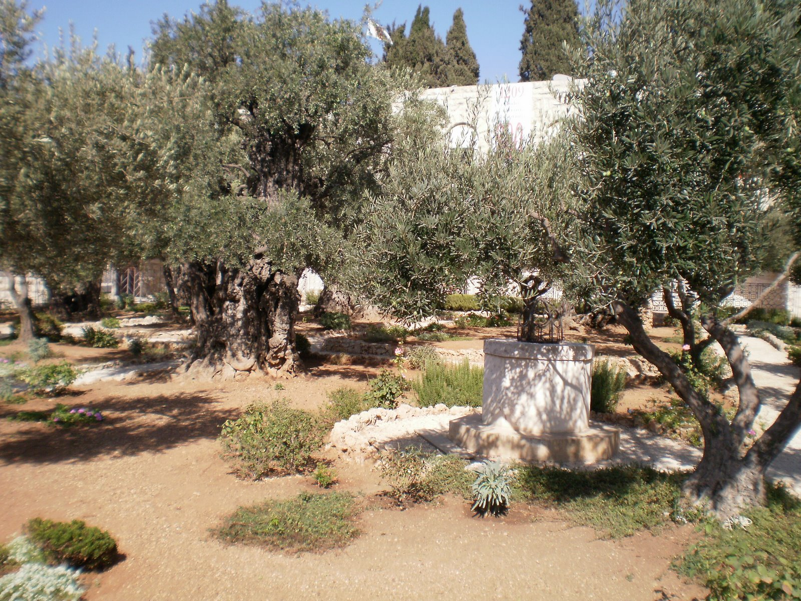 fotos do jardim das oliveiras : fotos do jardim das oliveiras ? Doitri.com