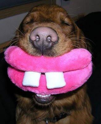 Anak anjing lucu
