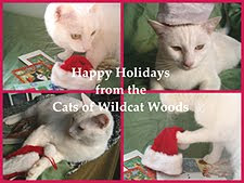 From our friends of Wildcat Woods