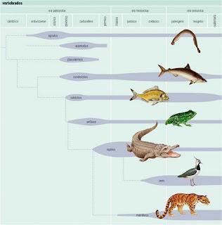 evolución de vertebrados