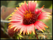 Macro Flowers Gallery