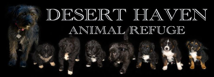 Desert Haven Animal Refuge