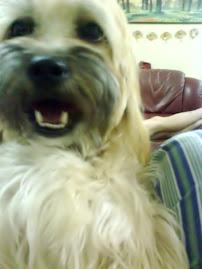 ♥--我家の可爱狗狗HEIDI--♥