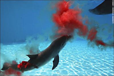 http://1.bp.blogspot.com/_k-uzaP4Gx6M/SMEImQQsGKI/AAAAAAAACN0/TKwxYWY3vZU/s400/dolphin4.jpg