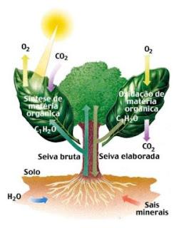 O que quer dizer a palavra fotossíntese?