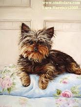 """Matthew Mead's Pup """"Oscar"""""""