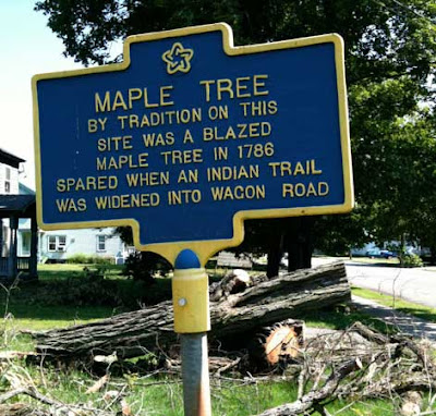 Blue historical marker sign reading MAPLE TREE By tradition on this site was a blazed maple tree in 1786 spared when an Indian trail was widened into a wagon trail. Behind the sign is a large tree, cut down in pieces