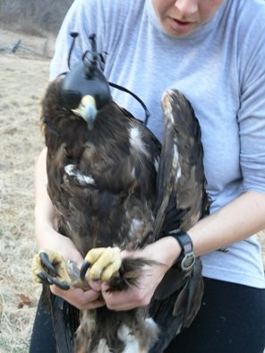 "Golden Eagle ""Virgil Caine"" is outfitted with telemetry unit"