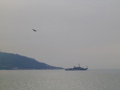 明石海峡を行き交う船とカモメ?ウミネコ?