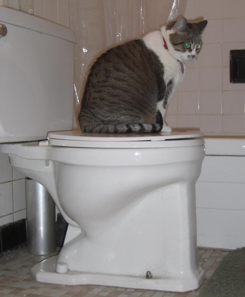 [toilet.jpg]