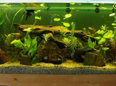 Aquarium decorations creating homes for fishes for How to decorate fish tank