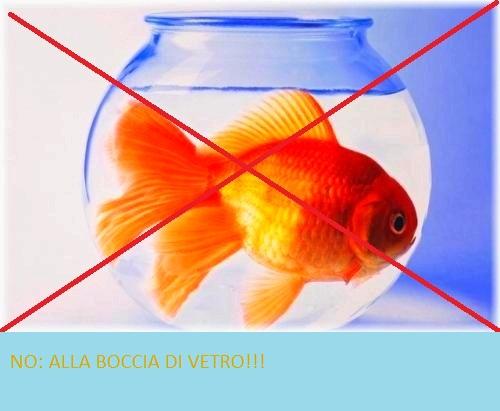 A tutta natura storia di un pesciolino dorato il pesce for Immagini pesciolini