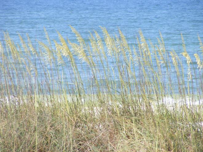 Mexico Beach 2009