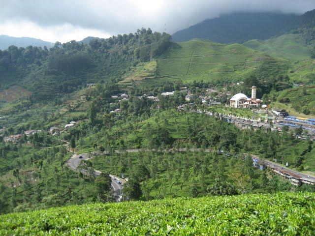 Pemandangan dari atas bukit perkebunan teh gunung mas 2