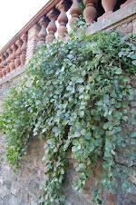 Alc.Iner. Via Romana - Florencia -Italia