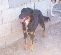 Negrita, esta hermosa perrita nos necesita- Argentina