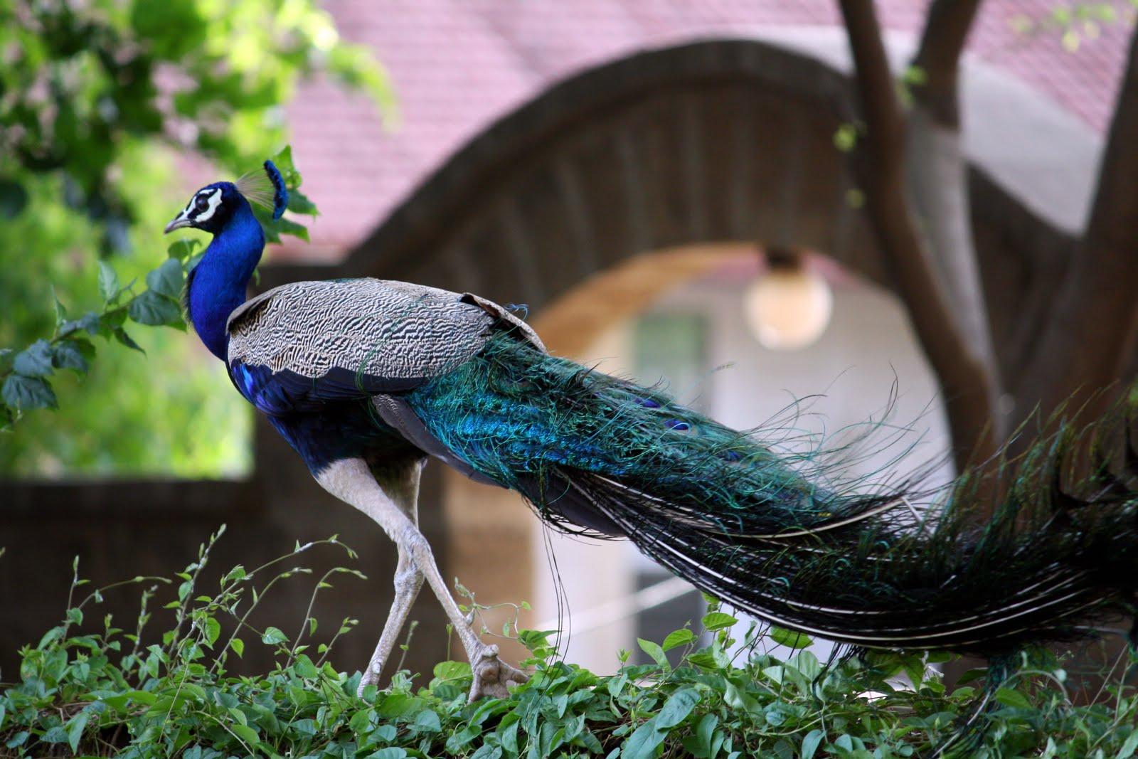 essay on birds of india