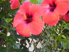 1 Flores de Raff con Osvaldo Espinola