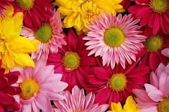 Osvaldo Espinola terapeuta floral