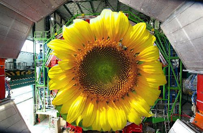 cern-flower... anyone? no?