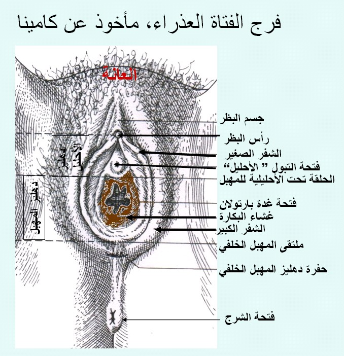 افضل الاوضاع الجنسية http://wawsecrets.blogspot.com/2010/11/blog-post_15.html