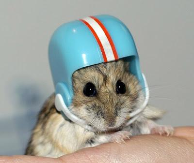 Ratinho de Capacete