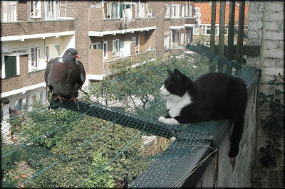 Gato suicida em 3... 2... 1...