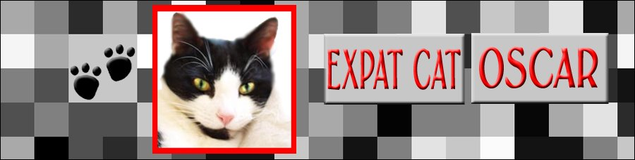 Expat Cat Oscar